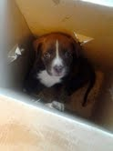 Found Puppy