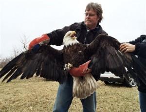Eagle Release Michigan