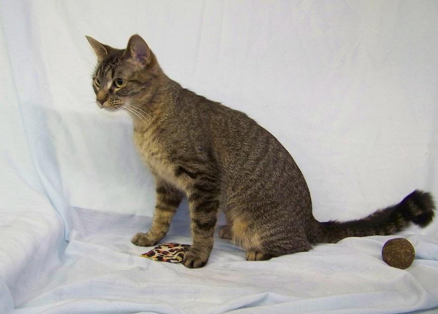 03-01-16 000153 FLASH kitty