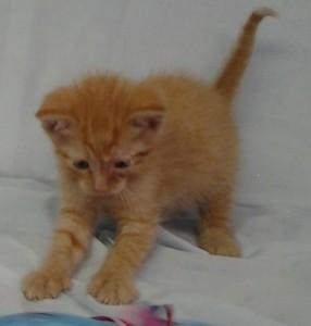 April 19 2016  Carson orphan kitten
