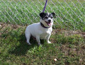 09-13-16-bis16-000212-lydia-dog