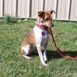 03-21-17 BIO17-000078 MELODY dog